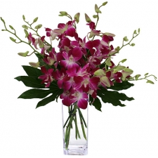 12 Orchids in Vase