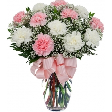 12 Pink & White Carnations