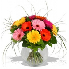 12 Assorted Gerbera