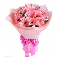 12 Pink Gerbers in Bouquet