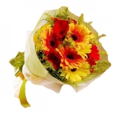 12 Red and Yellow Color Gerbera