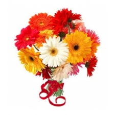 12 Mixed Color Gerbera