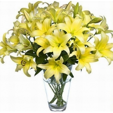 10 Yellow Lilies