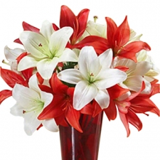 10 Colorful Mixed Lily