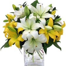 10 Mixed Colorful Lily