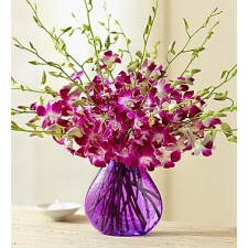10 Orchid in Vase