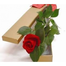 1 Red Rose in box