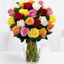 24 Mixed Color Rose in vase