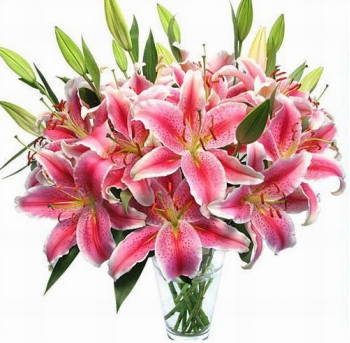 10 Pink Lilies